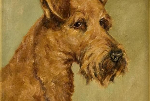 Pair of Irish Terrier Portraits